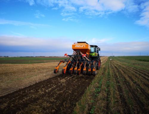 Siew pszenicy ozimej w uprawie pasowej