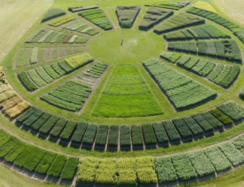 Firma Rolnas zaprasza na Krajowe Dni Pola 2020 w Minikowie