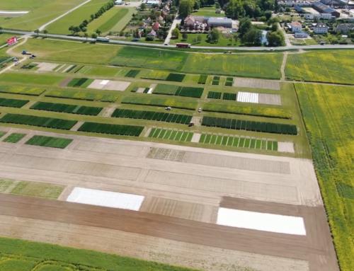 Dlaczego organizujemy Krajowe Dni Pola? Jakie gatunki roślin uprawnych mogą zobaczyć rolnicy podczas wydarzenia? Co wyróżnia Krajowe Dni Pola w Minikowie?