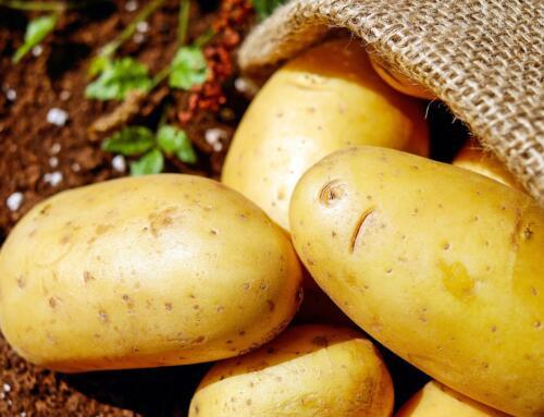 """""""Program dla polskiego ziemniaka. Bioasekuracja oraz innowacyjne rozwiązania w zakresie agrotechniki, ochrony i przechowalnictwa ziemniaka"""""""