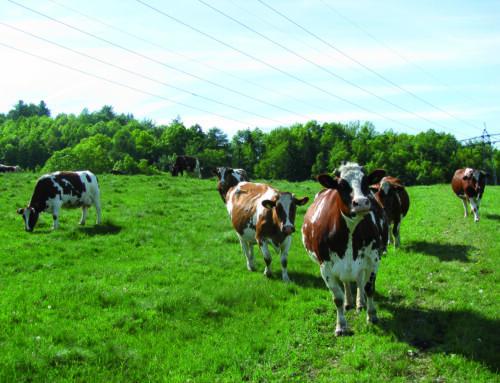 Konferencja np. Koncepcja zielonego ładu w gospodarstwach mlecznych: możliwości ograniczania zużycia antybiotyków oraz poprawy dobrostanu bydła mlecznego (DODR, Wrocław)