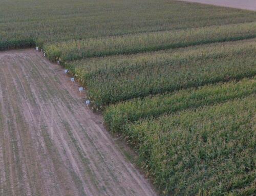 Warsztaty polowe pn. Dzień kukurydzy – elementem zwiększenia bioróżnorodności w produkcji roślinnej (OODR, Łosiów)