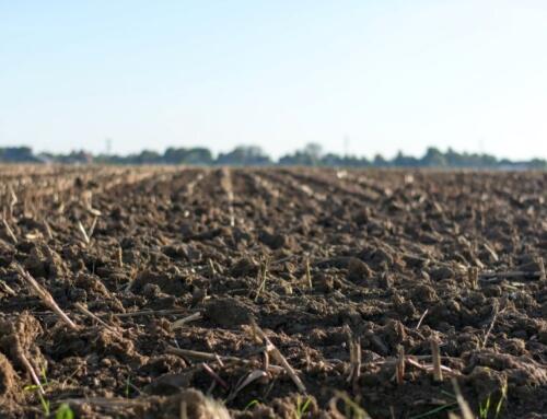 Warsztaty: Odtwarzania potencjału plonotwórczego gleby – rolnictwo regeneratywne w praktyce