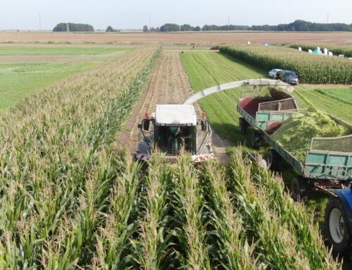 Dzień kukurydzy i soi (KPODR, Minikowo)