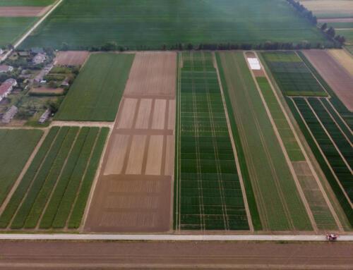 Zielony Agropiknik Młodych Rolników w Pożogu II (LODR, Końskowola)