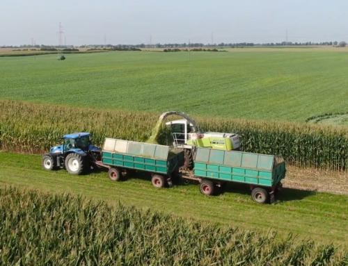 Krajowe Dni Pola 2021 – Agrotechnika w uprawie kukurydzy