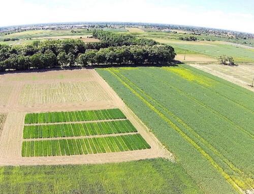 Projekt AGROBANK – narzędzie wspierające Strategię wdrażania bioróżnorodności w rolnictwie