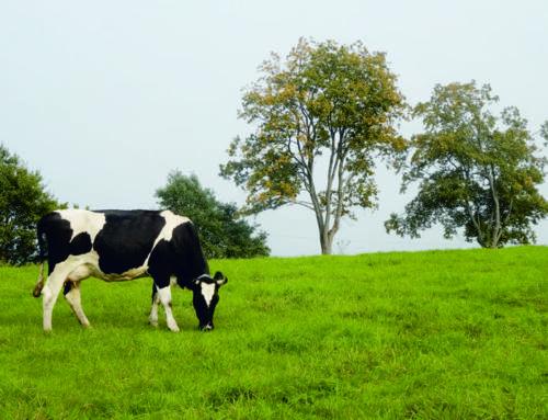 Polska Federacja Hodowców Bydła i Producentów Mleka Region Oceny Północ z/s w Minikowiezaprasza na stoisko podczas Targów AGRO-TECH Minikowo 2021