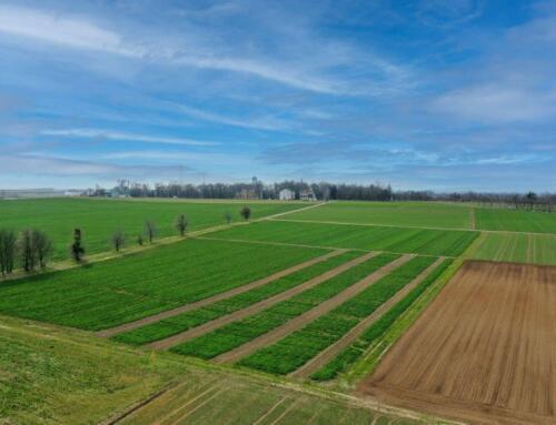Warsztaty polowe w Opolskim Ośrodku Doradztwa Rolniczego w Łosiowie – szansą na rozwój Zielonego Ładu na Opolszczyźnie