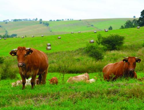 Konferencja SIR pn. Zrównoważony chów bydła w kontekście Zielonego Ładu (DODR, Wrocław)